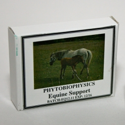 Equine Support Box (small)